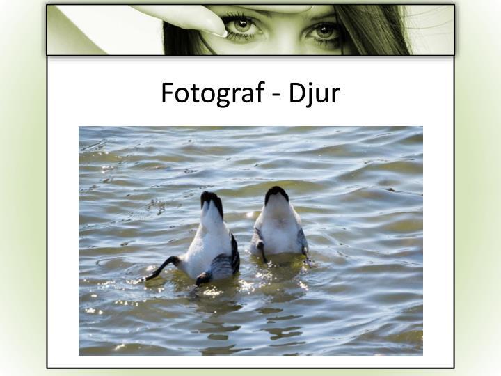 Fotograf - Djur