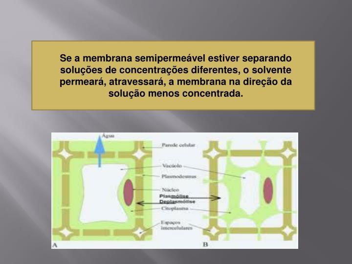 Se a membrana semipermeável estiver separando  soluções de concentrações diferentes, o solvente permeará, atravessará, a membrana na direção da solução menos concentrada.