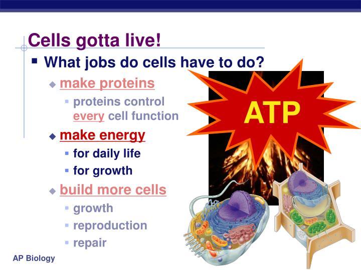 Cells gotta live!