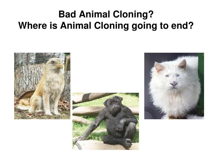 Bad Animal Cloning?