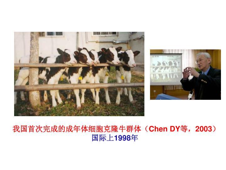 我国首次完成的成年体细胞克隆牛群体(