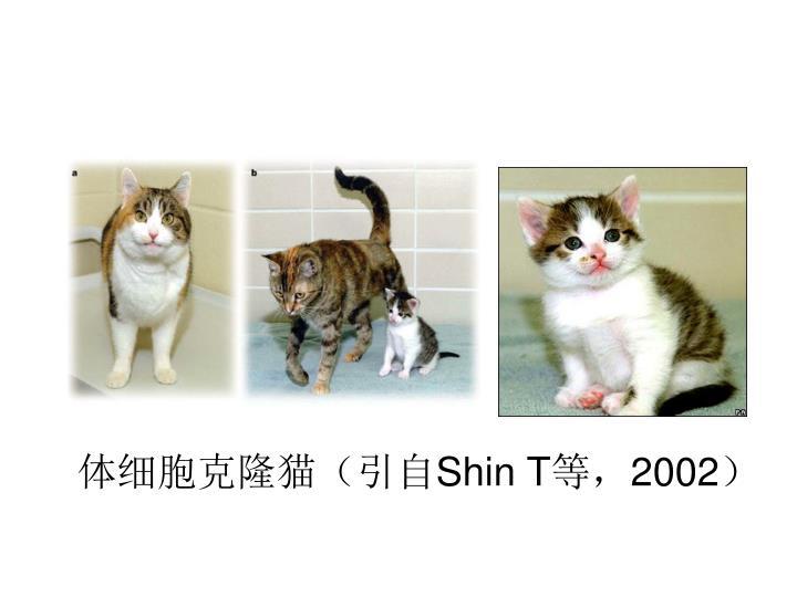 体细胞克隆猫(引自