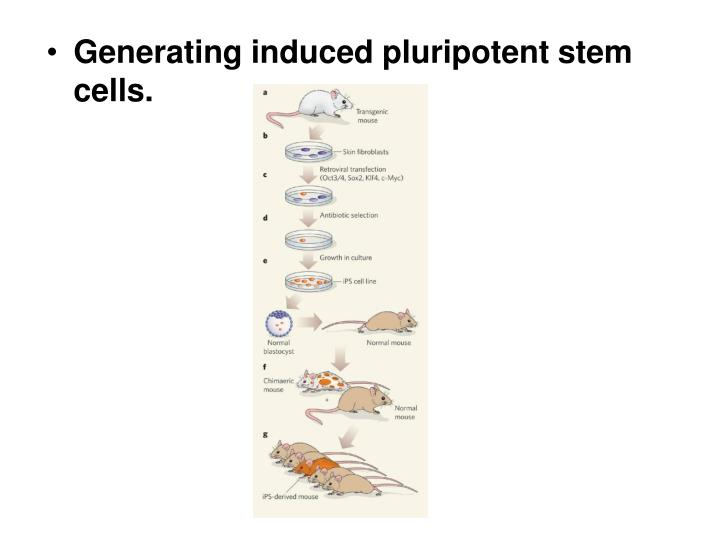 Generating induced pluripotent stem cells.