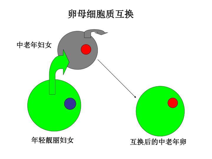 卵母细胞质互换
