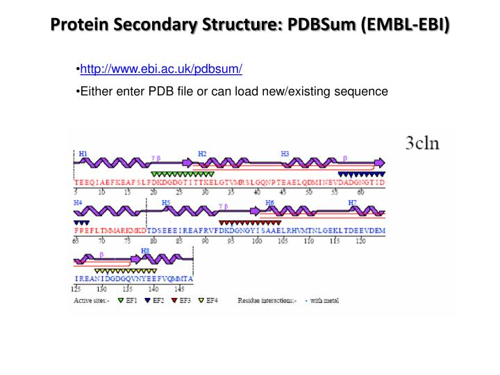 Protein Secondary Structure: