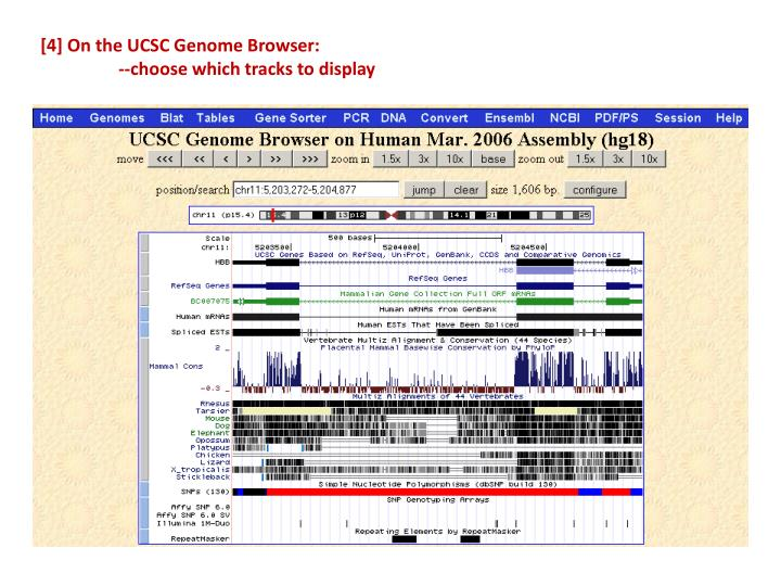 [4] On the UCSC Genome Browser:
