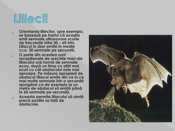 Liliecii