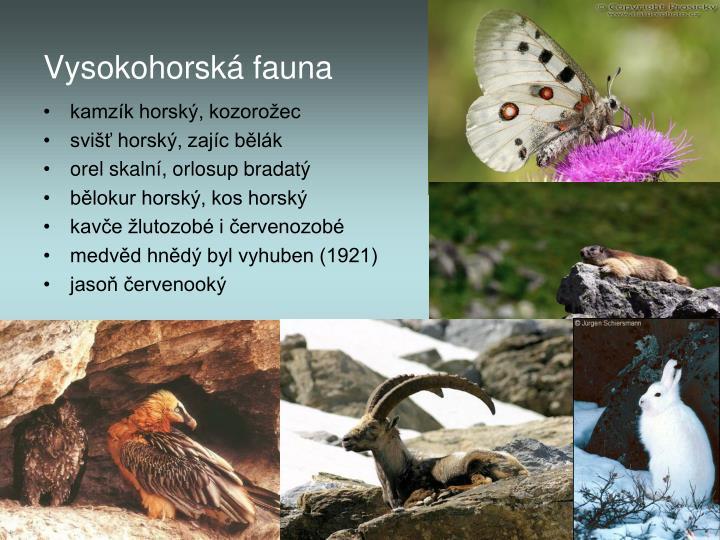 Vysokohorská fauna