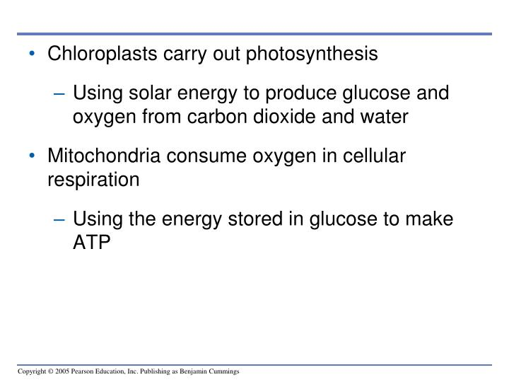 Chloroplasts carry out photosynthesis