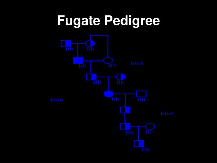 Fugate Pedigree
