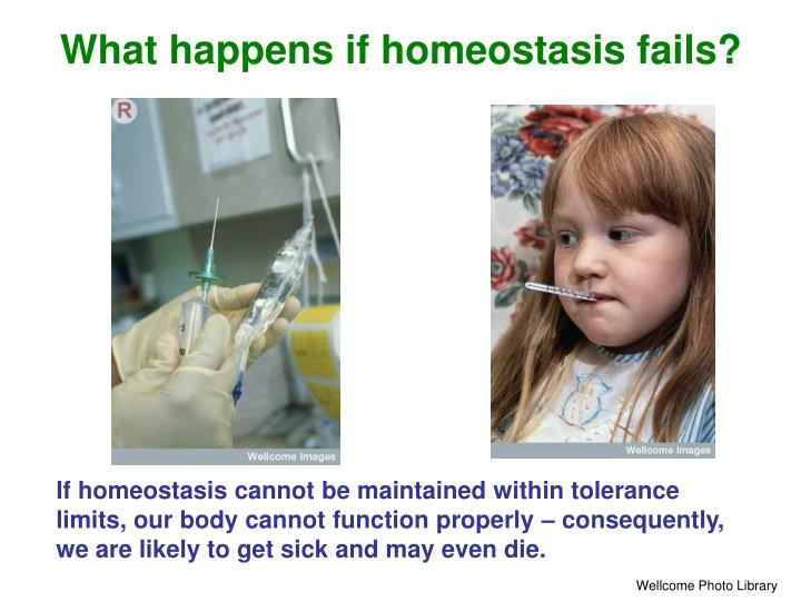 What happens if homeostasis fails