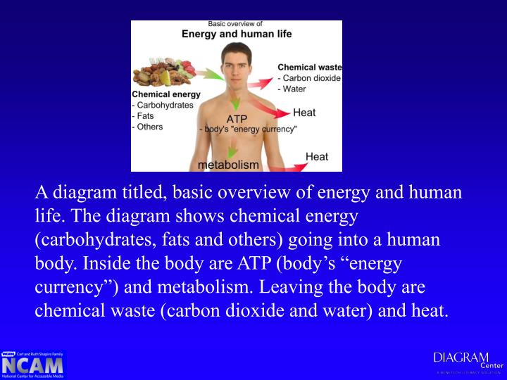 A diagram titled, basic overview of energy and human life. The diagram shows chemical energy (carbohydrates, fats and others) going into a human body. Inside the body are ATP (body