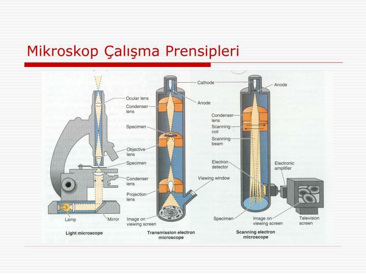 Mikroskop Çalışma Prensipleri