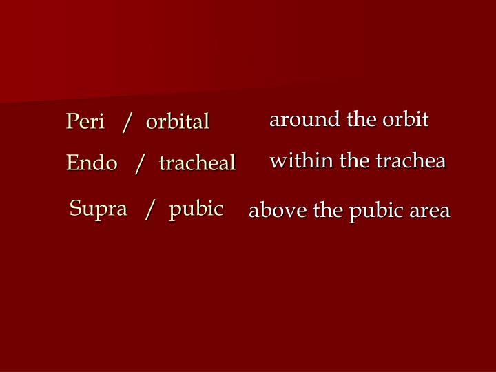around the orbit
