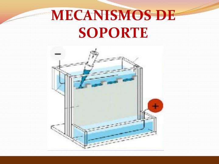 MECANISMOS DE SOPORTE