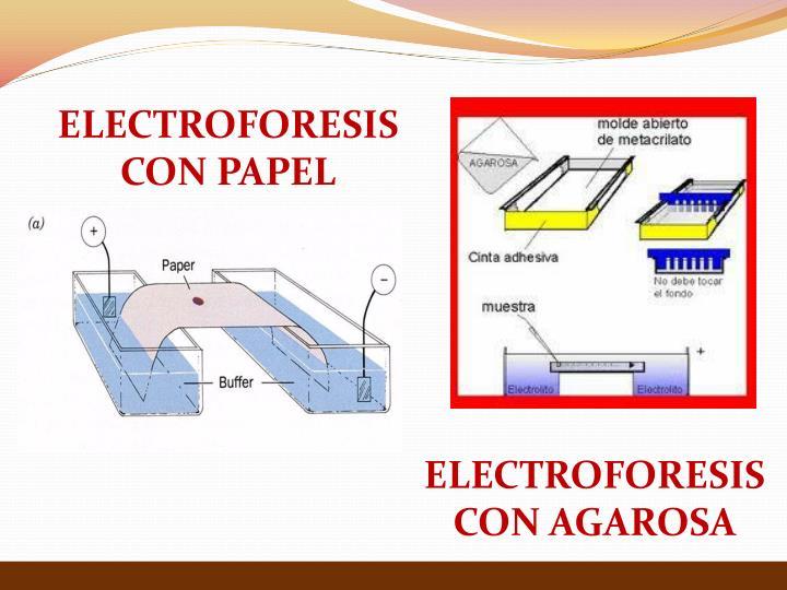ELECTROFORESIS CON PAPEL