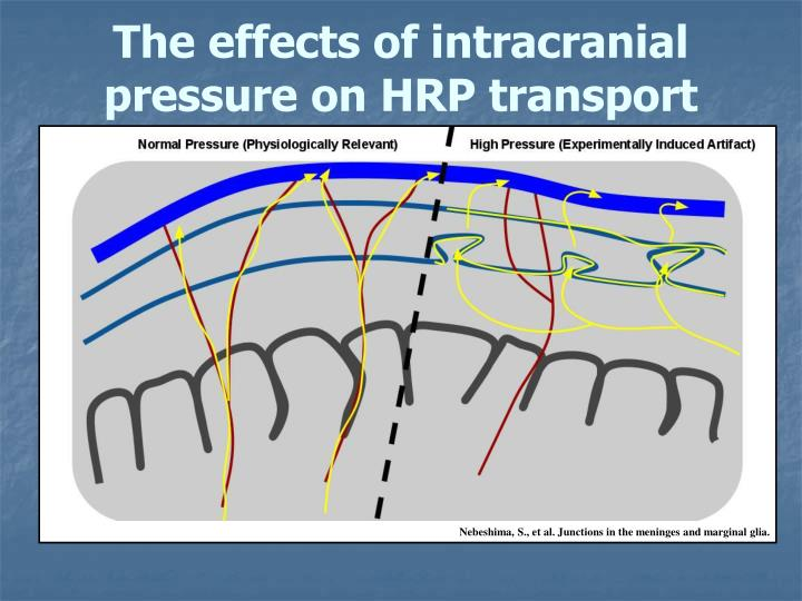 The effects of intracranial pressure on HRP transport