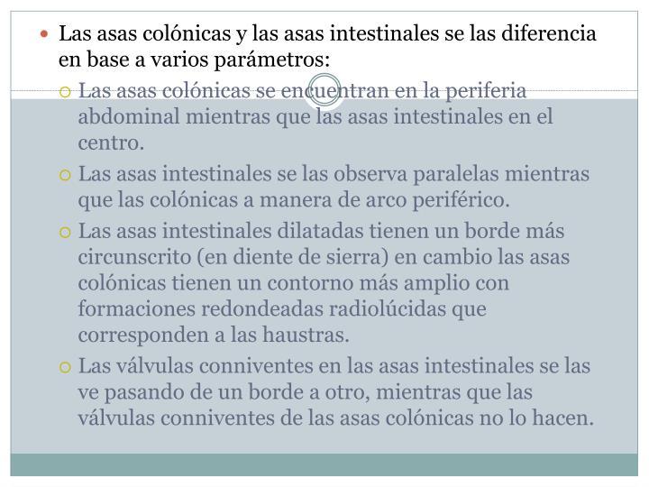 Las asas colónicas y las asas intestinales se