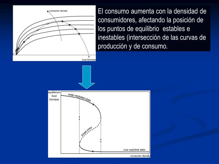 El consumo aumenta con la densidad de consumidores, afectando la posición de los puntos de equilibrio  estables e inestables (intersección de las curvas de producción y de consumo.