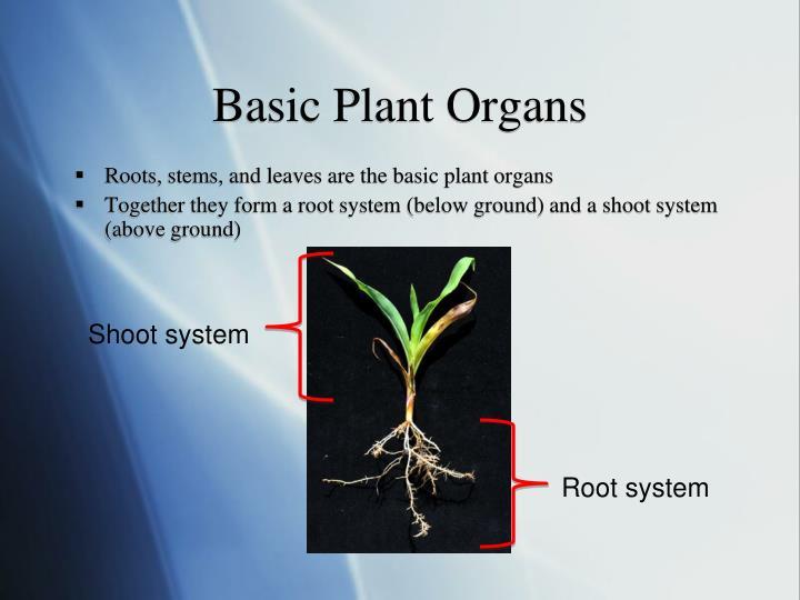 Basic Plant Organs