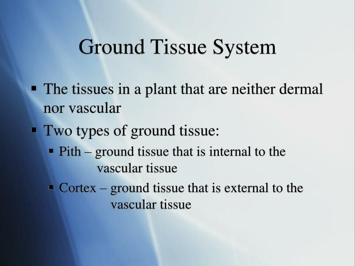 Ground Tissue System