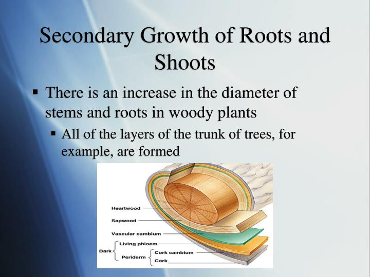 Secondary Growth of Roots and Shoots