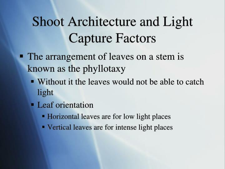 Shoot Architecture and Light Capture Factors