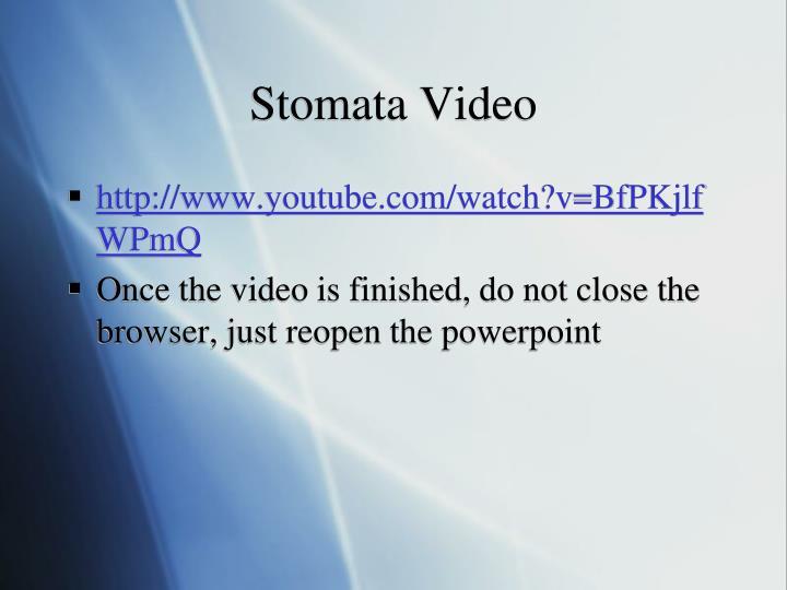 Stomata Video