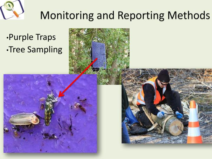 Monitoring and Reporting Methods