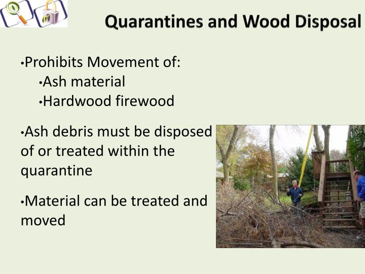 Quarantines and Wood Disposal
