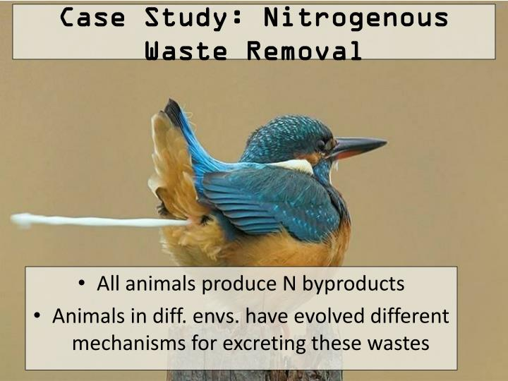 Case Study: Nitrogenous Waste Removal