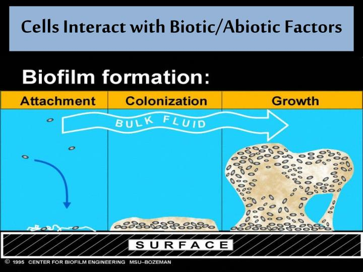 Cells Interact with Biotic/Abiotic Factors