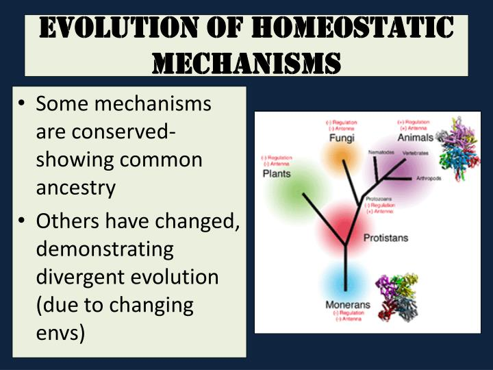 Evolution of Homeostatic Mechanisms