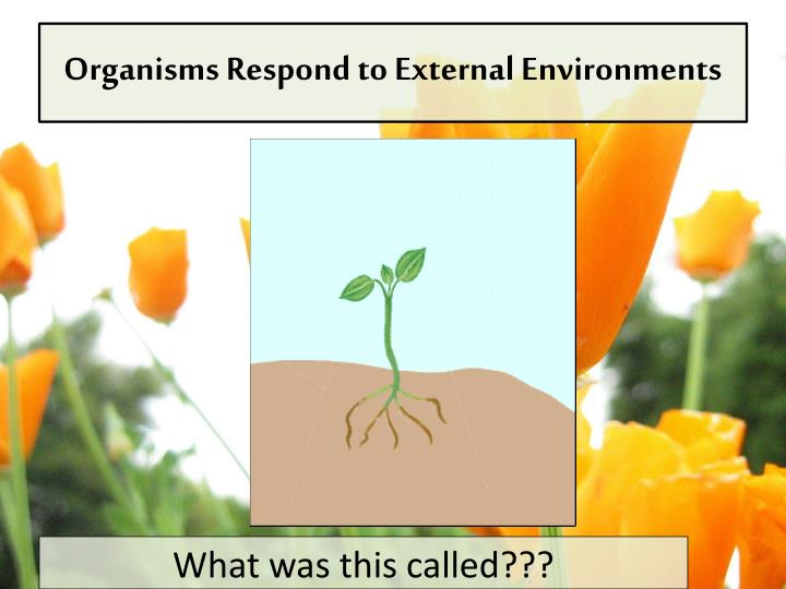 Organisms respond to external environments