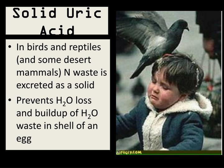 Solid Uric Acid