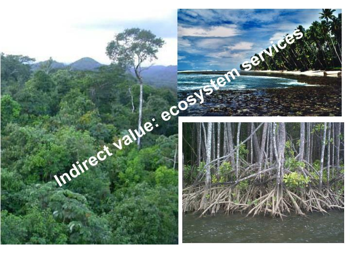 Indirect value: ecosystem services