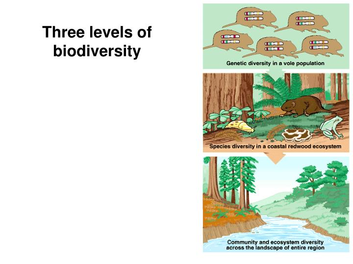 Three levels of biodiversity