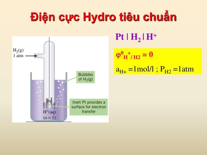 Điện cực Hydro tiêu chuẩn