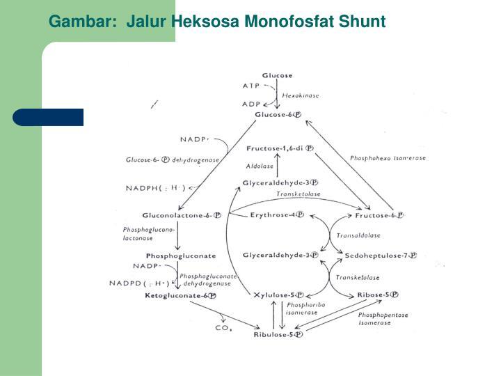 Gambar:  Jalur Heksosa Monofosfat Shunt