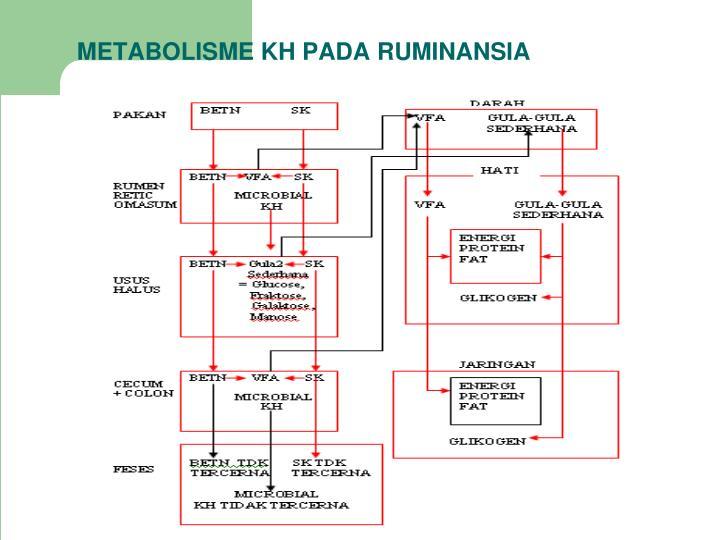 METABOLISME KH PADA RUMINANSIA