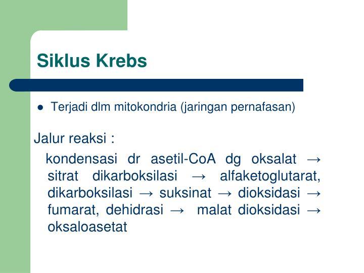 Siklus Krebs