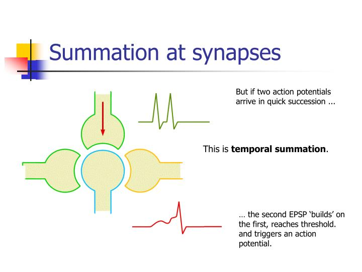 Summation at synapses