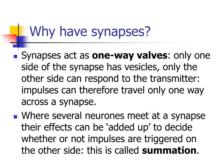Why have synapses?