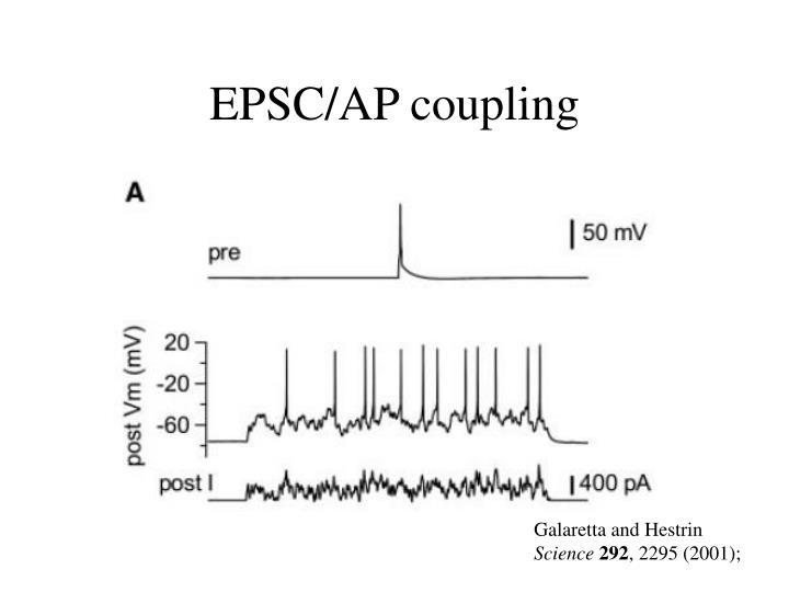 EPSC/AP coupling