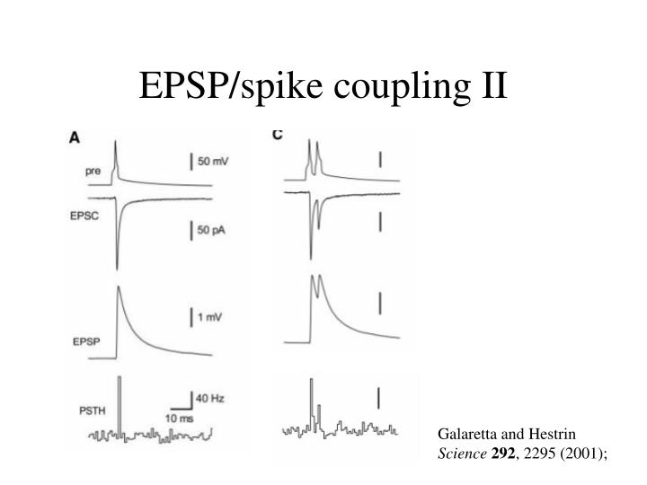 EPSP/spike coupling II