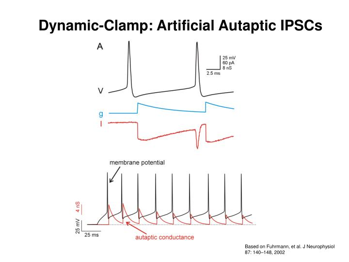 Dynamic-Clamp: Artificial Autaptic IPSCs