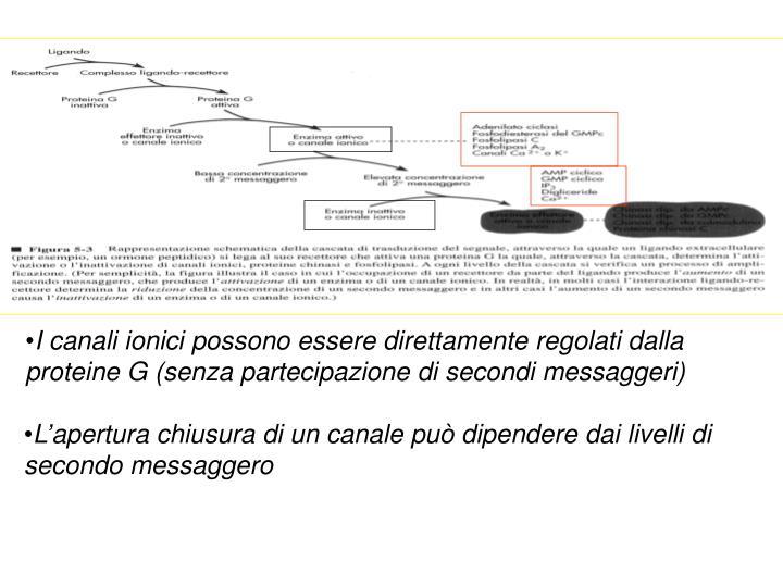 I canali ionici possono essere direttamente regolati dalla proteine G (senza partecipazione di secondi messaggeri)