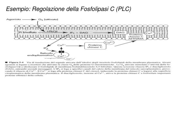 Esempio: Regolazione della Fosfolipasi C (PLC)