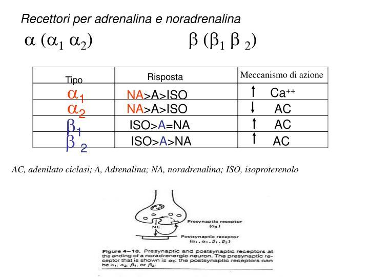 Recettori per adrenalina e noradrenalina