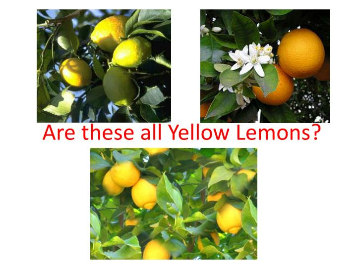 Are these all Yellow Lemons?